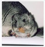 Chinchilla Passion